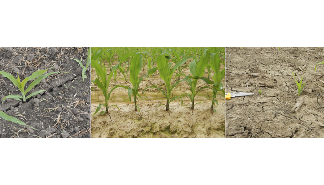 Three different field conditions side-by-side, showing normal soil, dry soil, and cracked soil.