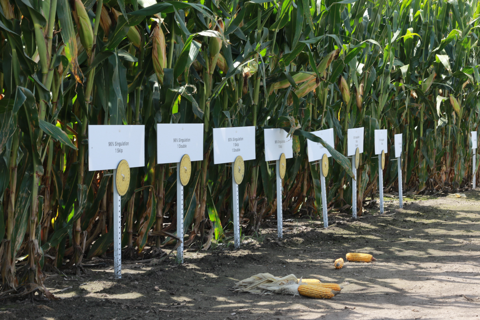 Agronomy trials corn at the PTI Farm.